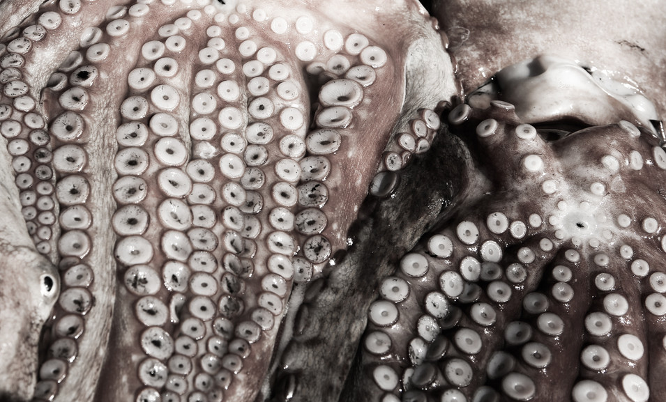 Octopuses don't live very long