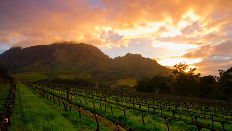 Wineland Sunrise