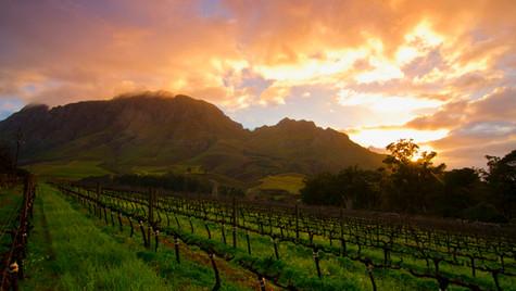 Wineland Sunrise