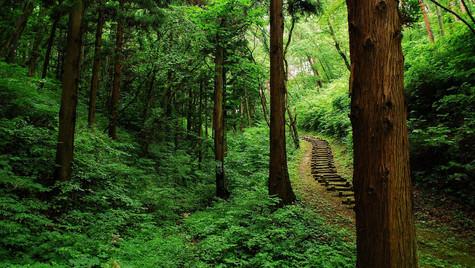Stairway to Healing