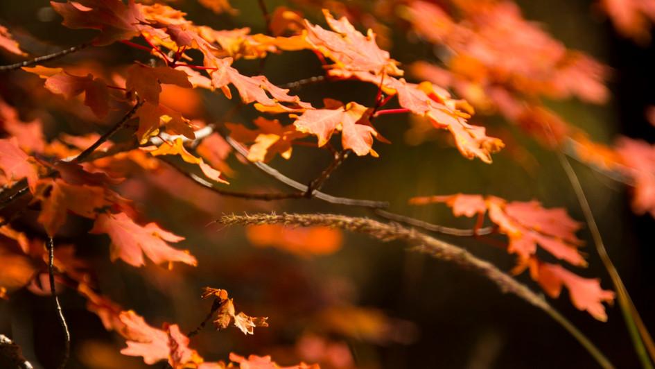 Call of Autumn