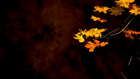 Autumn's Paintbrush