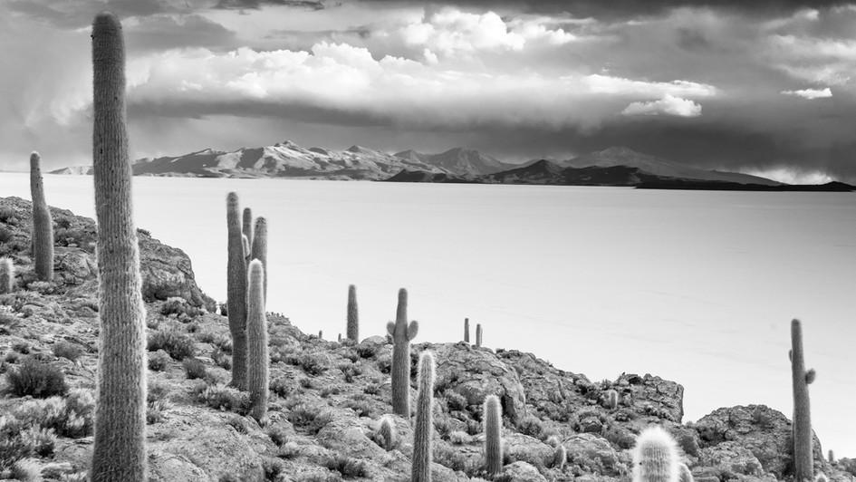 Desert Isle