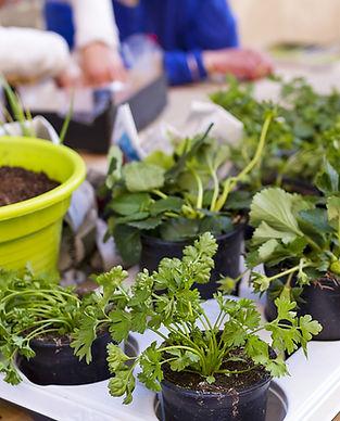 Atelier jardinage en residence