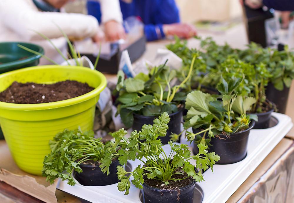 Plants inside pots