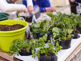 Top 5 Hoss Tools For Gardening