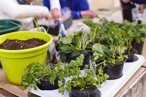 Sponsor a Container Gardening Kit