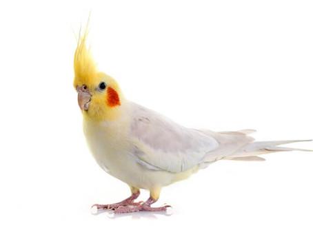 Understanding Bird Cremation
