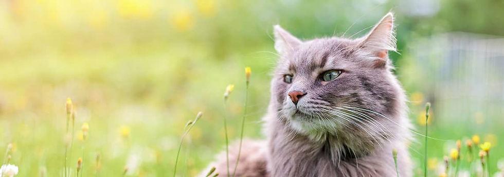 cat_banner_3CCC.jpg