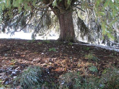 Site sacré - Franches-Montagnes - 12 avril 2015