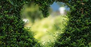 Coronavirus update: Are Weddings Allowed in England?