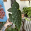 Thumbnail: Begonia Maculata
