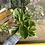 Thumbnail: Peperomia Obtus Varg
