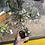 Thumbnail: Pilea Silver