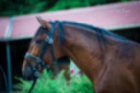 photos equestres