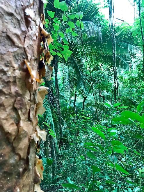 IG_Green jungle.jpg