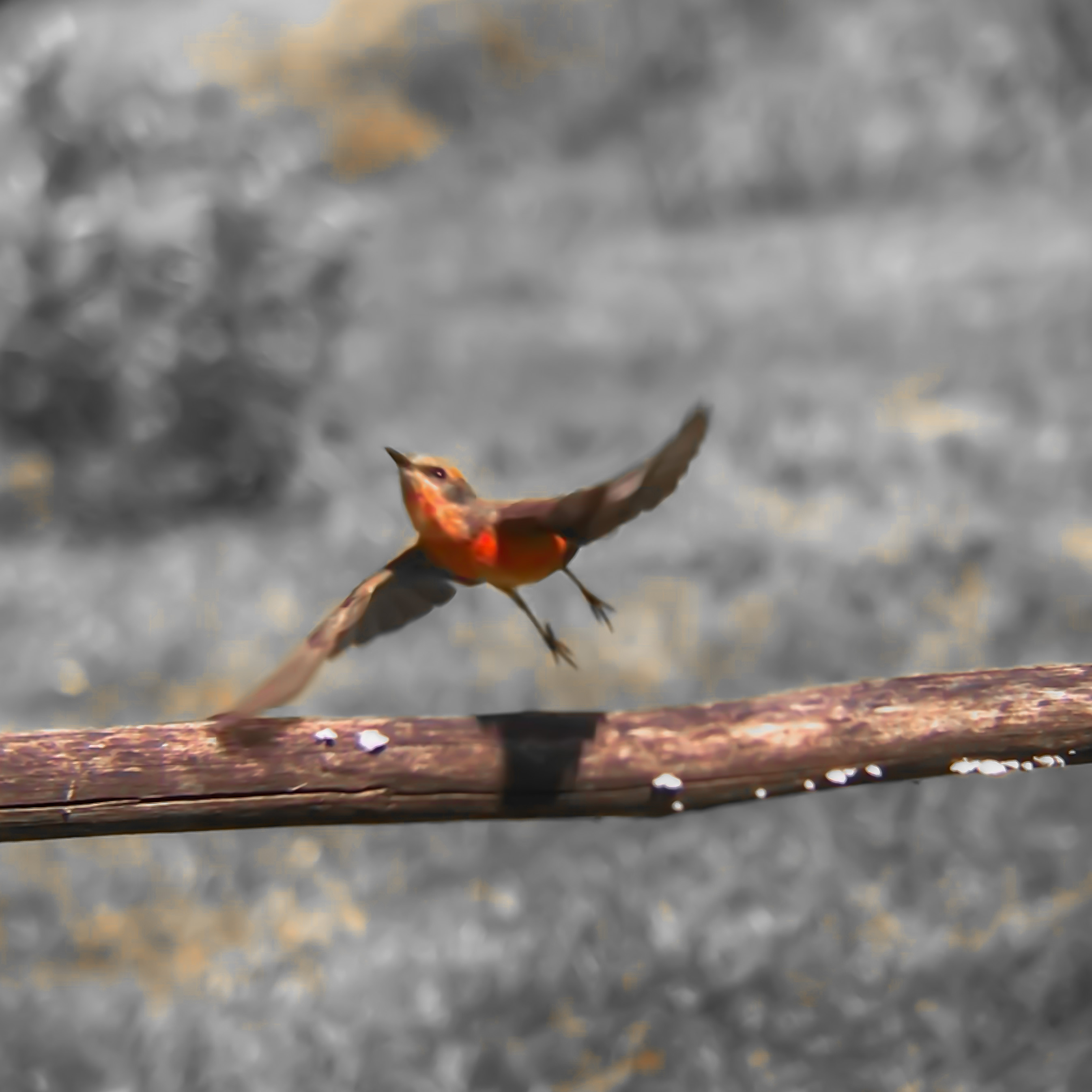 Birdsong breakfast for beginners
