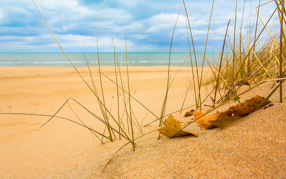 dune grass2.jpeg