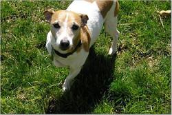 2006 -Champion dad's pup