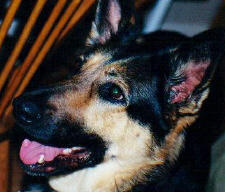 1998 - I adopted my second dog Star