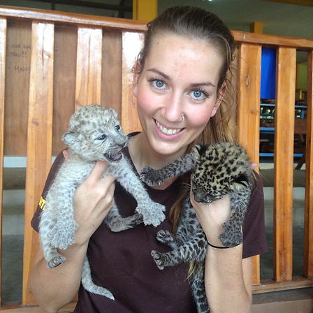Join Cub Team and Volunteer with Big Cat