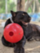 blackcat.jpg