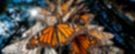 monarca-rosario.jpg