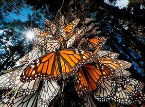Santuario - Mariposas 1.jpg