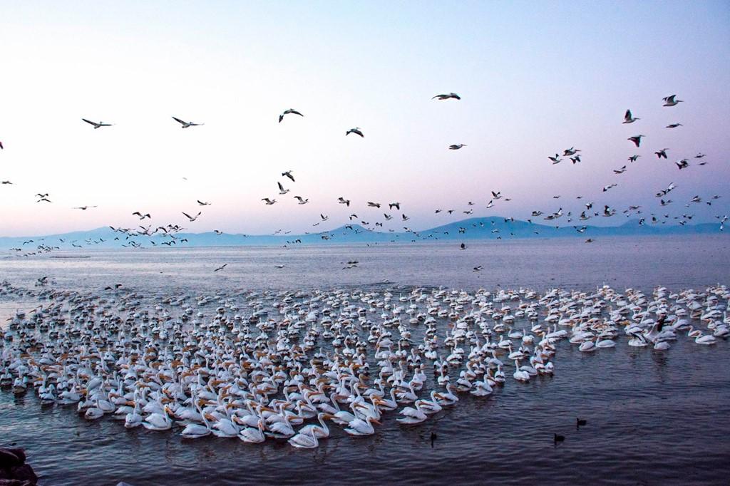 Petatan - Pelicanos 2