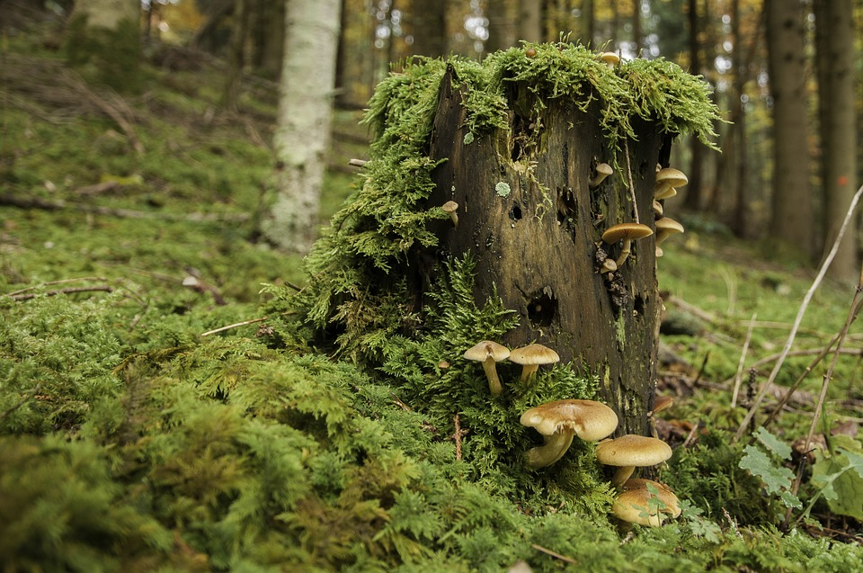 forest-1112057_960_720