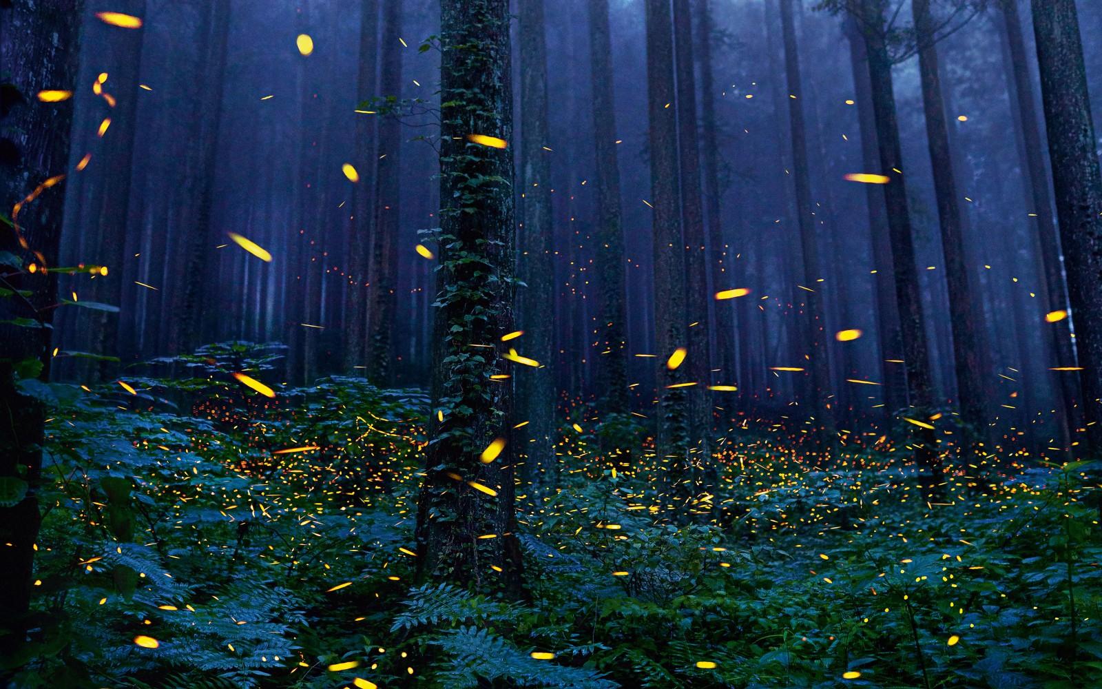 fireflies_forest-1181241