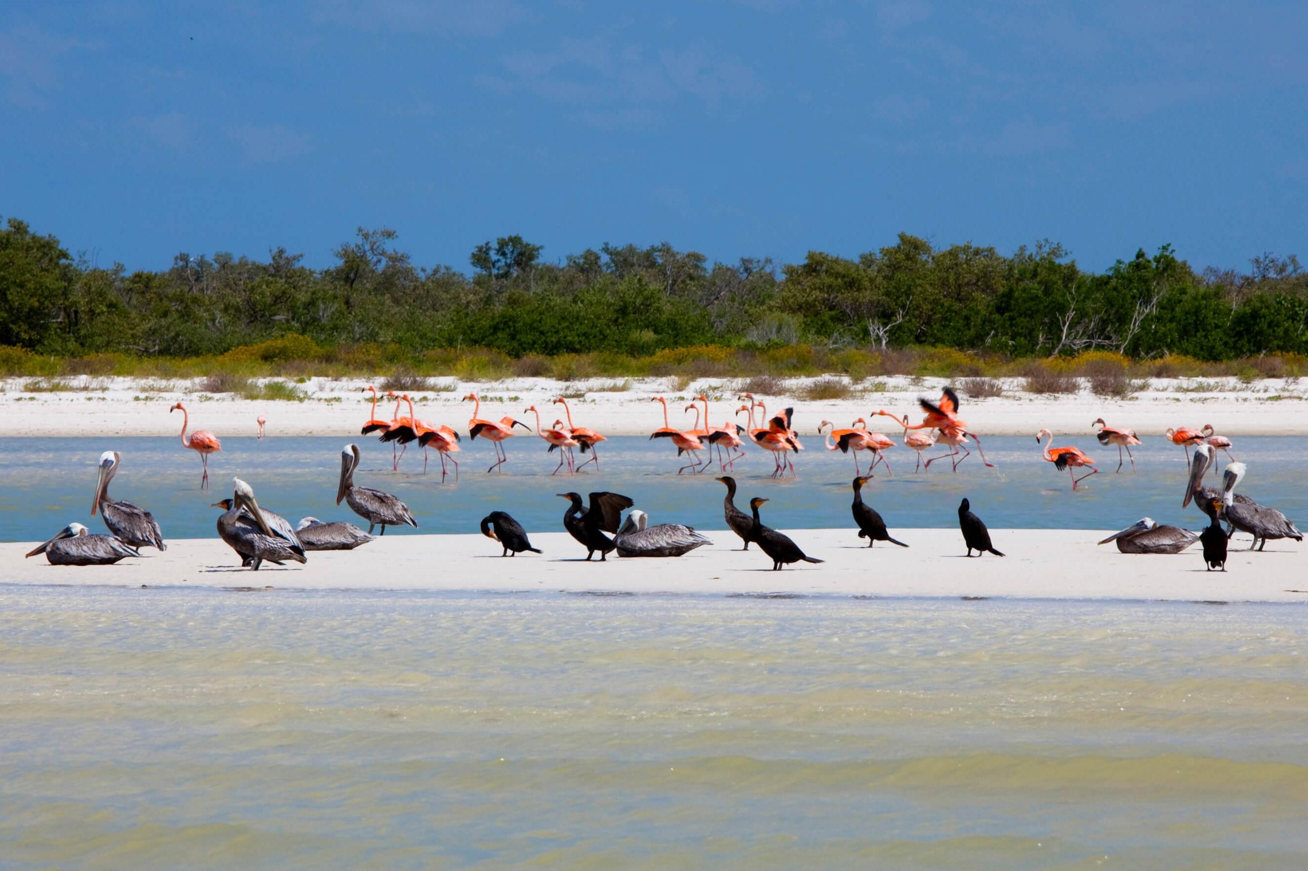 Holbox - Isla Pajaros 2