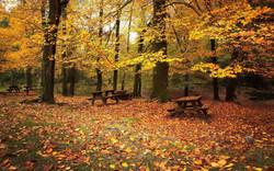 Talpa de Allende - Bosque de Maple 2