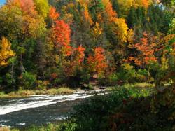 Talpa de Allende - Bosque de Maple 1