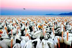 4 Pelicanos-3
