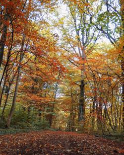 Talpa de Allende - Bosque de Maple 5