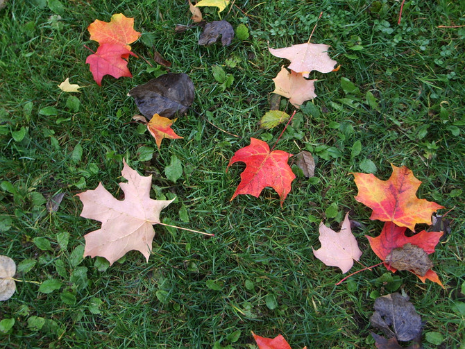 Move Well, Stay Well This Fall