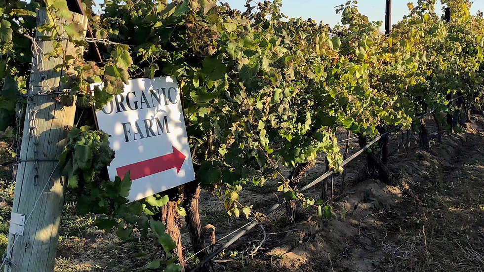 Tagaris Winery & Vineyards_Moment.jpg