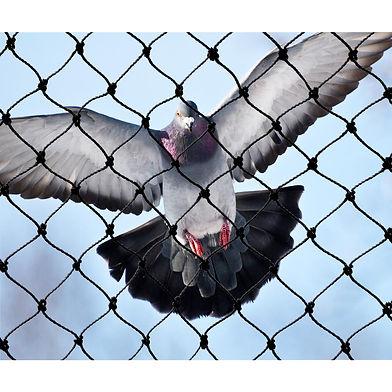 Bird-X-NET-PE-50-50-image.jpg
