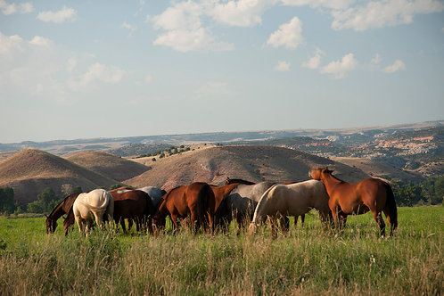 Horse Mounds by Roy Crystal, Photographer