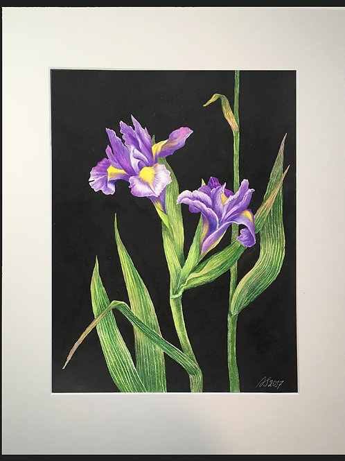 Irises on a Black Background by Anastasia Semash Art Studio