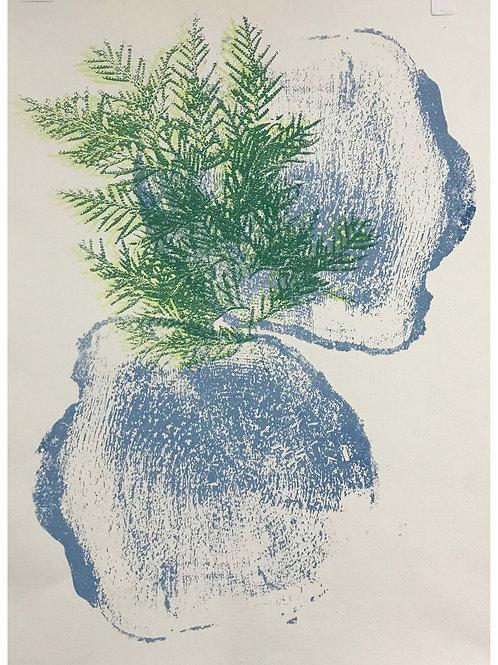 My Arborvitae by Cathy Garnett