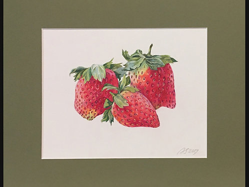 Strawberries Study by Anastasia Semash Art Studio