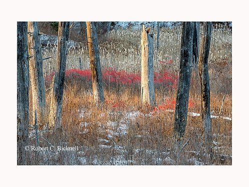 December Meadow  by Robert Bicknell Photography