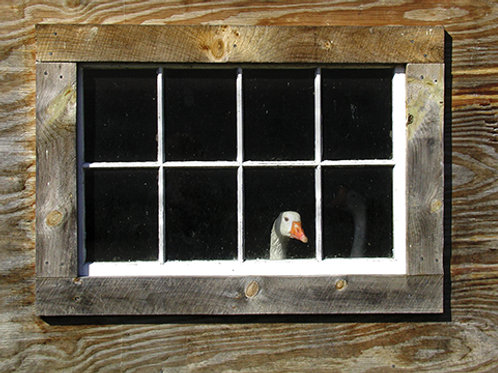 Goose in the Window by Janet Smith Photography