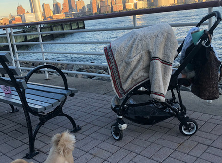 Ode to The Stroller