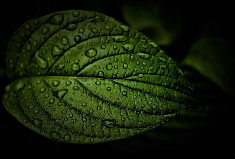 leaf-5298312_1920.jpg