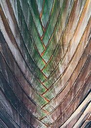 Interwoven pattern in nature - backgroun