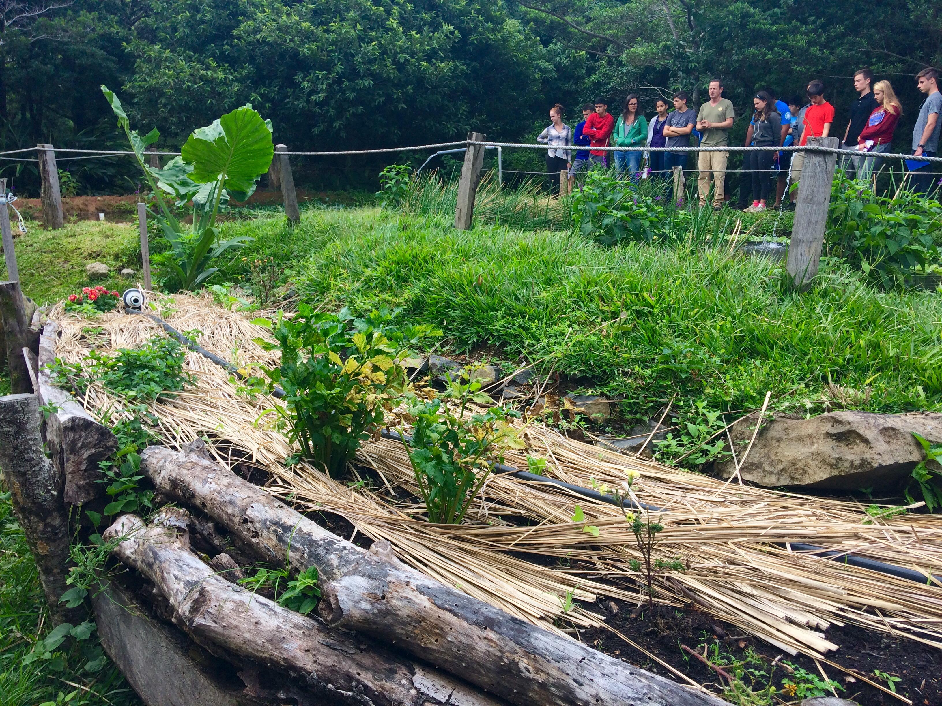 Permaculture Tour - Huglekultur beds