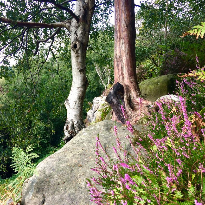 Nature Meditation Sussex